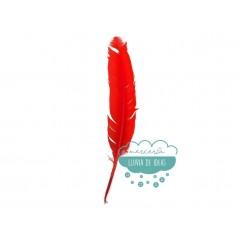 Pluma de pavo - Varios colores